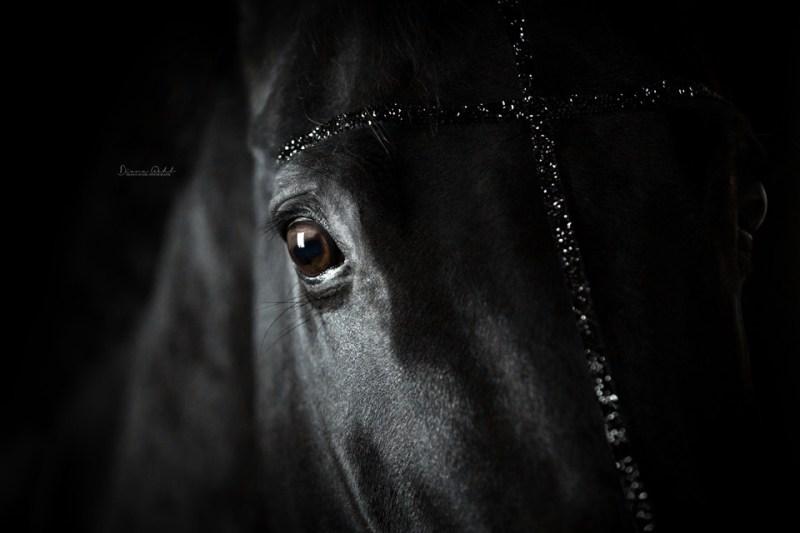 www.pegasebuzz.com | Equestrian photography : Diana Wahl.