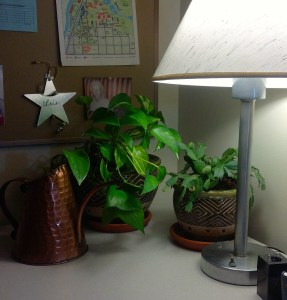 officeplants