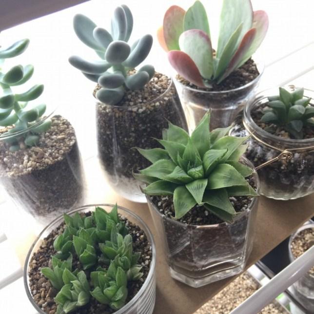 多肉植物 色々 ガラスの器