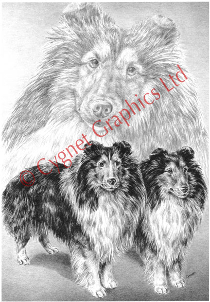 Dinner Sofa Dog Drawings And Breed Art Prints: Canine Artwork And