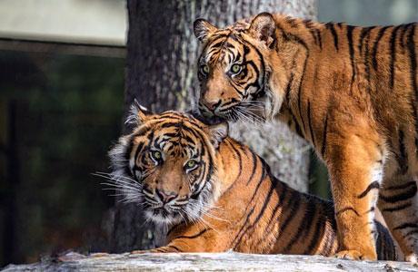 Harga Tiket Masuk Zoo Negara Malaysia Penginapan Net 2020