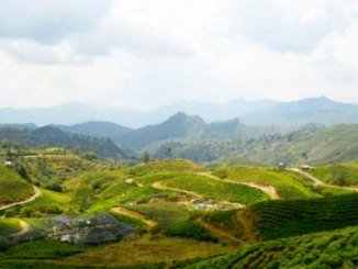 Malino Highlands, Gowa (sumber: viva.co.id)