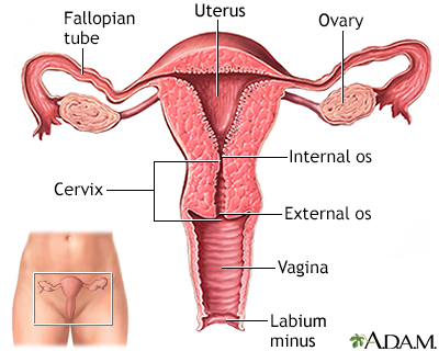 Cancer Center - Penn State Hershey Medical Center - Hysterectomy