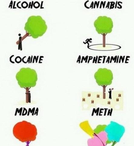 arboles drogas 1