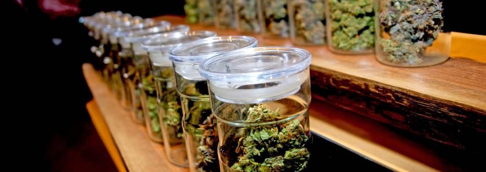 3ª Edició: Formació en reducció de riscos i danys associats als consums de cànnabis