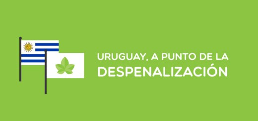 uruguay cannabis 1