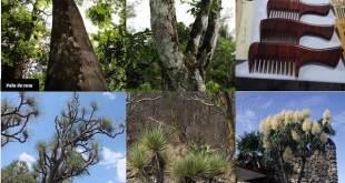 México:preocupación por el comercio de especies amenazadas