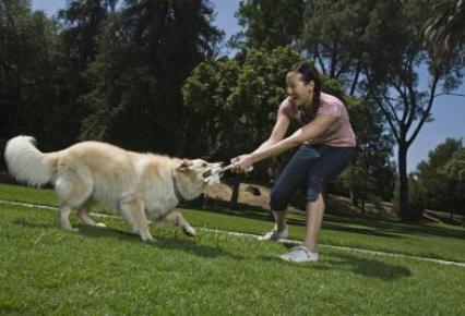 Algunos perros tienen mal olor