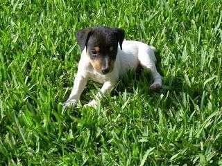 Fotos Cachorros Bodeguero Andaluz