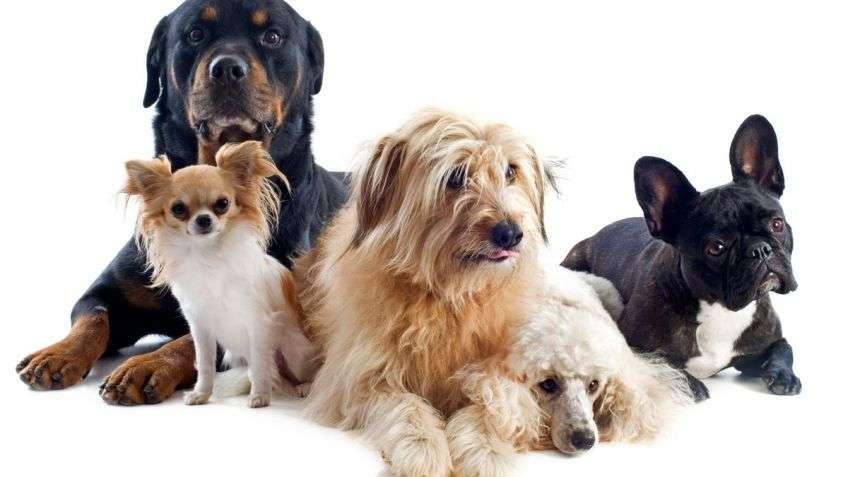 Perros que Orinan en la Cama- Evítalo