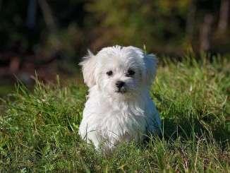 ¿El Síndrome Postvacacional Afecta a los Perros?