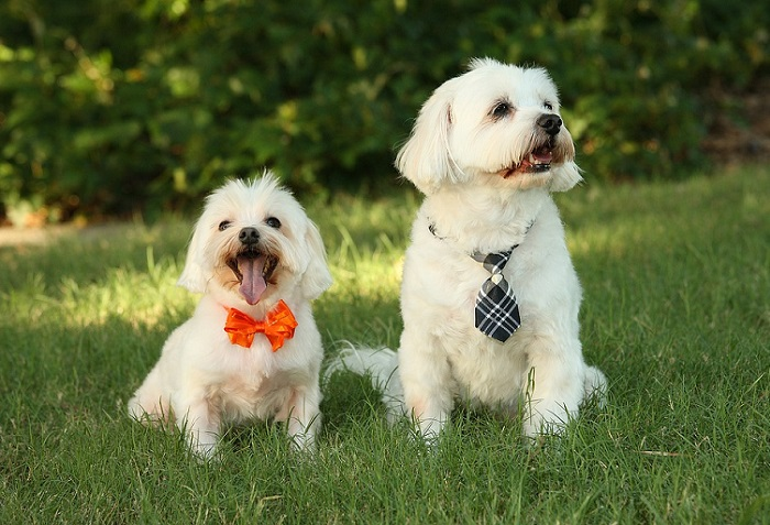 Revisión Dental Gratuita para tu Perro en Octubre
