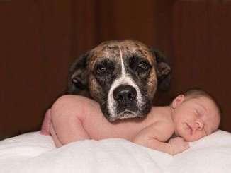 Vídeos Graciosos de Bebés Riendo con sus Perros