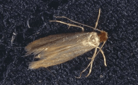moth spray for rugs  Roselawnlutheran