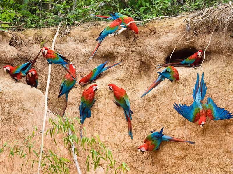 Amazon River Hd Wallpaper Viaje Al Manu 5 D 237 As