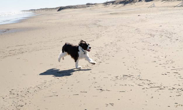 Phoebe At The Beach