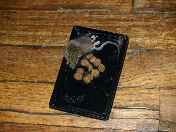 The Different Types Of Mouse Traps Explained Pest Revenge