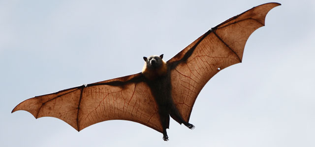[Imagem: pestsolution-morcegos.jpg]