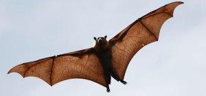 Pest Solution - Controle de Morcegos