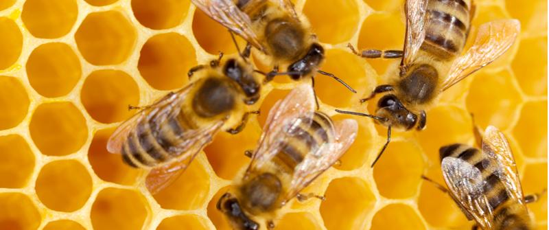 Bee Information For Kids Bumblebee Honey Bee Facts
