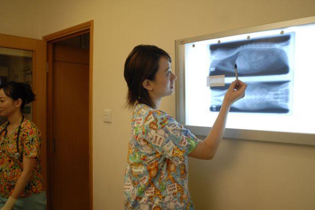 天后寵物醫院 Tin Hau Pet Hospital- 天后寵物診所,發現寵物有異樣時請立即就醫, 天后寵物美容   Zone One Zone - 寵物推介