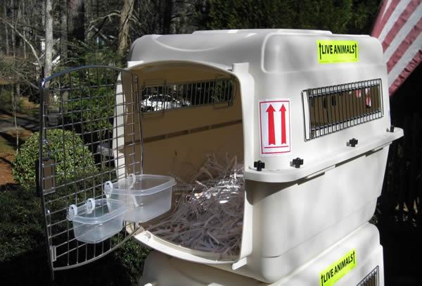 Dog Water Crate Goldenacresdogscom