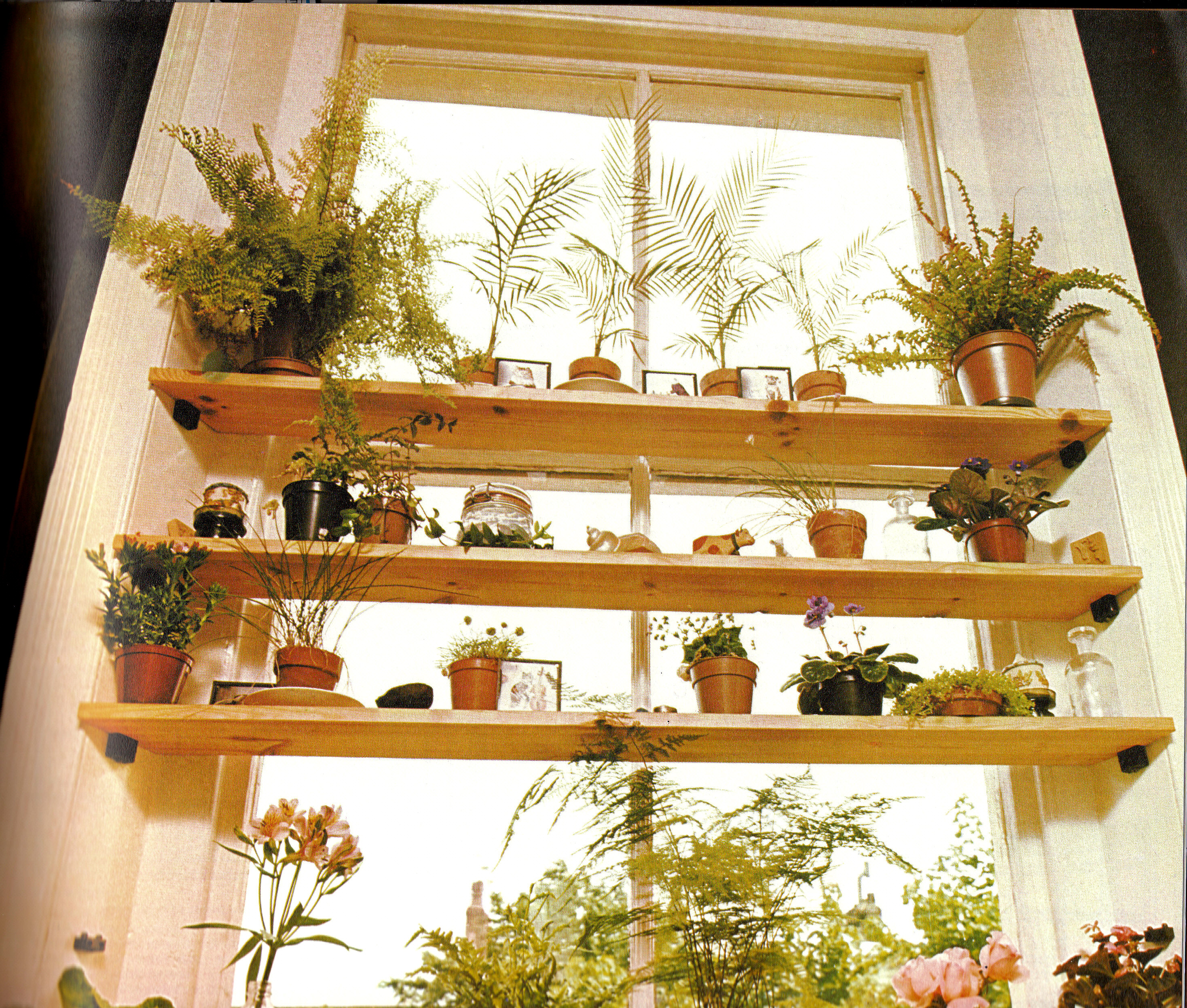 Plant Shelving Indoor Plants Page 5