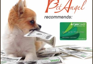 Pet Angel Santa Fe, CareCredit card
