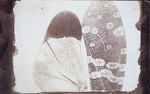 Archives of Influential Early Photographer Fox Talbot Get New Lease on Life  800px Photomicrograph of insect wings   By William Henry Fox Talbot