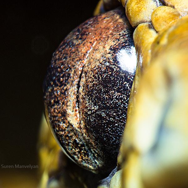 Stunning Macro Photographs of Animal Eyes macroeye1