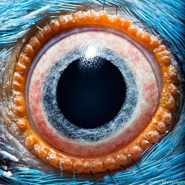 Stunning Macro Photographs of Animal Eyes macroeye13