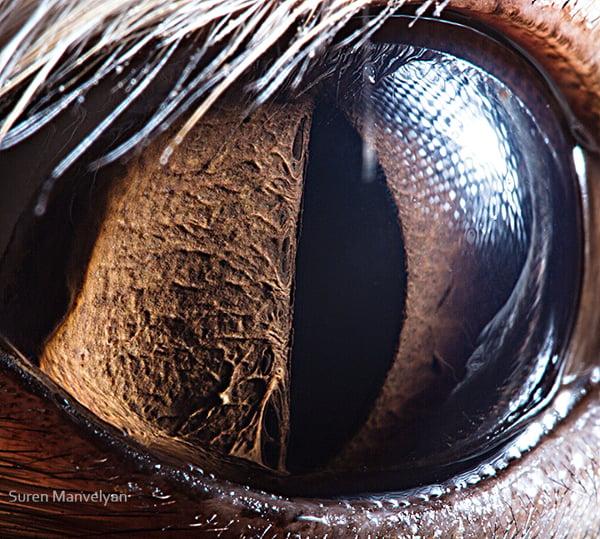 Stunning Macro Photographs of Animal Eyes macroeye6