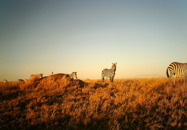 Camera Trap Images Offer a One of a Kind Look at Life on the Serengeti serengeti8