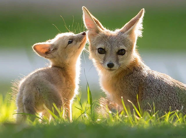 Cute Dog Baby Hd Wallpaper 10 Reasons Why You Should Try Wildlife Photography