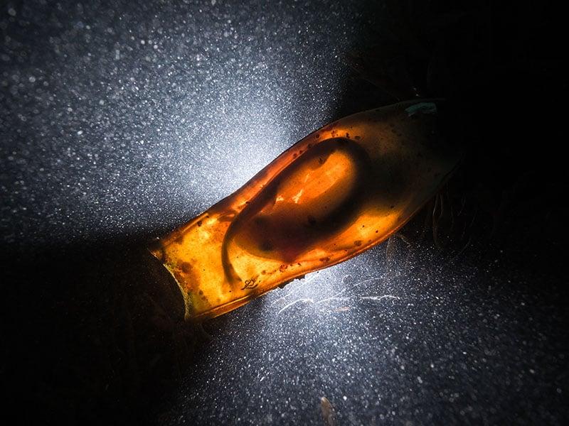 """""""Catshark Supernova."""" Dan Bolt/UPY 2016"""