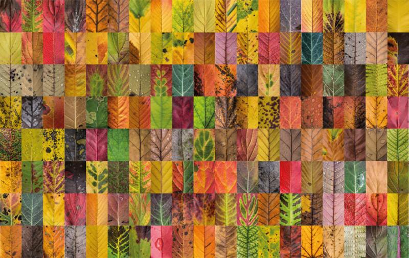 Philadelphia In The Fall Wallpaper Macro Photos Capture The Stunning Diversity Of Autumn Leaves