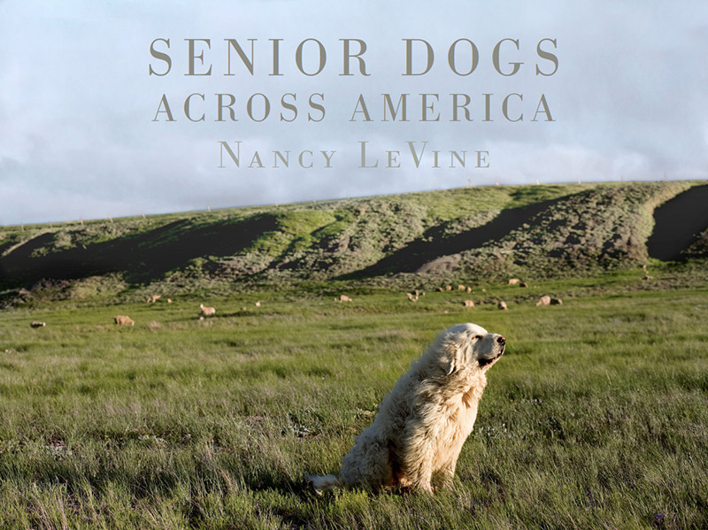 senior dogs across america portraits