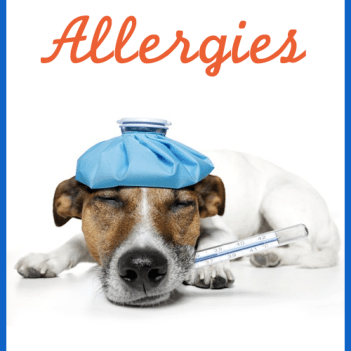 about-dog-allergies