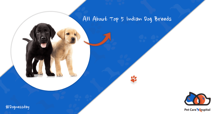 Top-5-Indian-Dog-Breeds