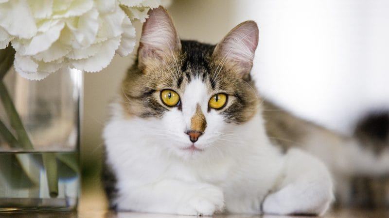 The Ages and Stages of Cat Food \u2014 Pet Central by Chewy