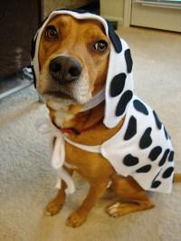 DIY Dog Dalmatian Costume - petdiys.com