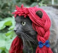 DIY Raggedy Ann Pet Costume - petdiys.com