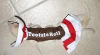 DIY Ferret Tootsie Roll Costume - petdiys.com