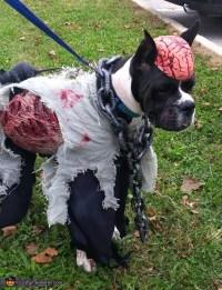 DIY Dog Zombie Costume - petdiys.com