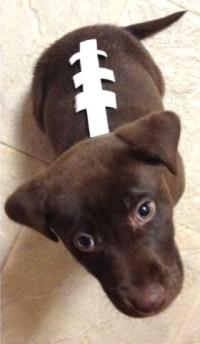 DIY Dog Football Costume