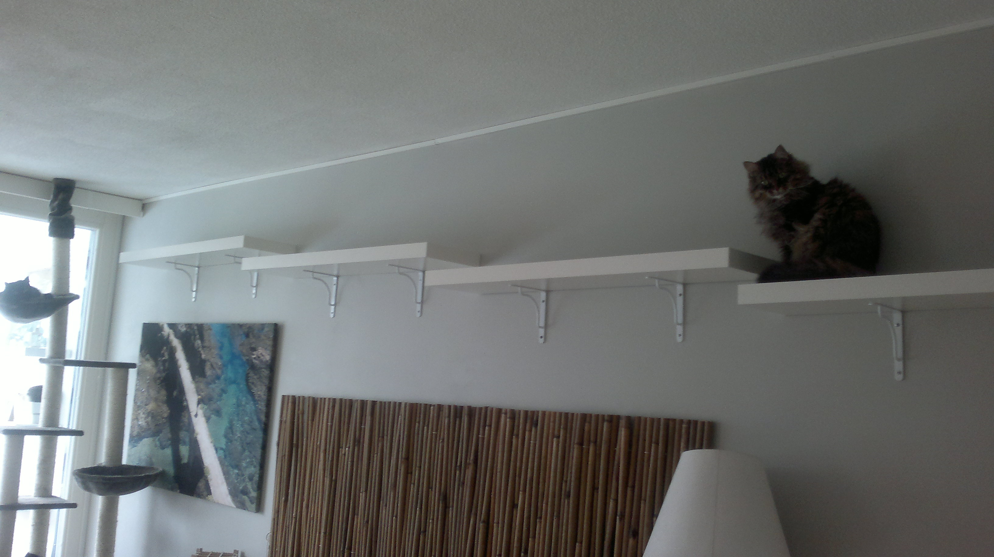 Affordable Cat Shelves How To Prepare A Home With Cats For A Dog Petdynamics