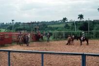 Rodeo Cuba 1999