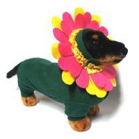 'Beverly Hills Chihuahua' Flower Dog Halloween Costume ...