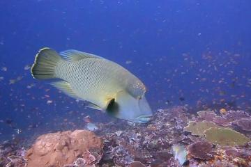 Komodo : poiscaille à gogo