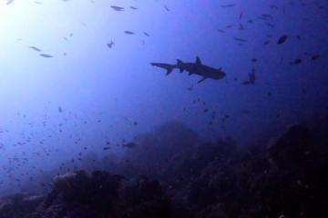Un requin, deux requins, trois requins…